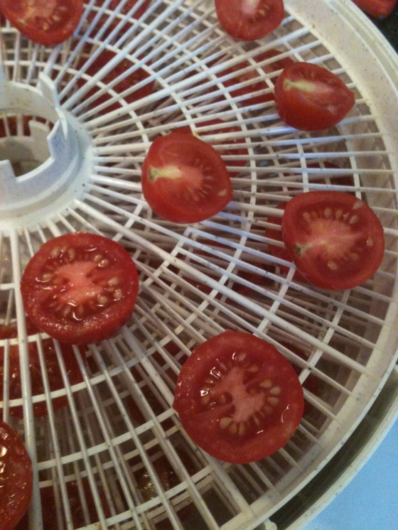 NutriSue - sliced tomatoes on dehydrator trays